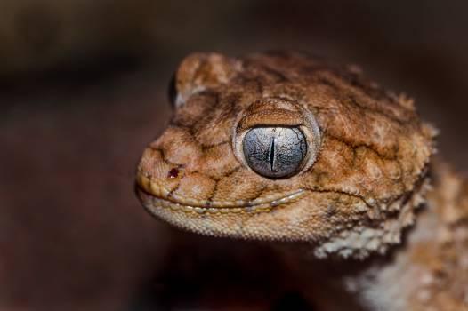 Snake Viper Horned viper #291693