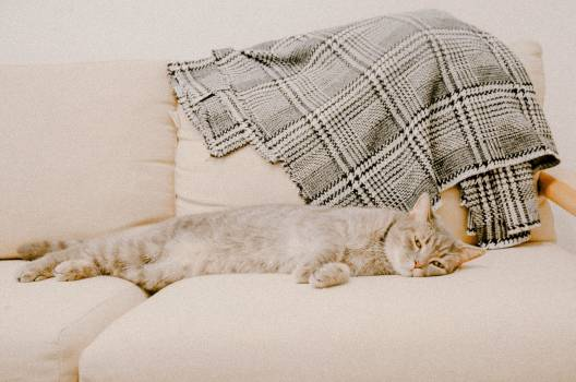 Lace Pillow Home Free Photo