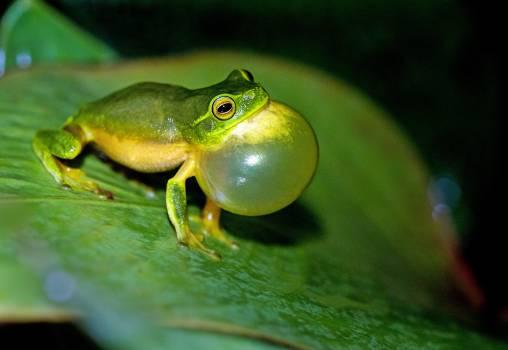 Tree frog Frog Amphibian #292594