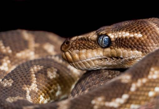 Snake Rattlesnake Reptile #293824