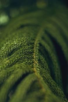 Plant Fern Pattern Free Photo