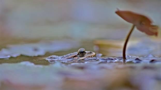 Egg Reptile Wildlife Free Photo