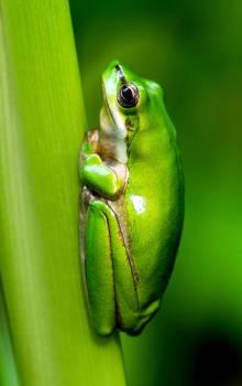 Tree frog Frog Amphibian #297483