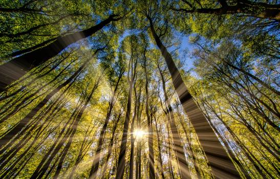 Tree Forest Woody plant Free Photo