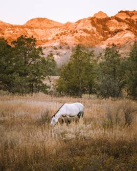 Horse Cow Grass Free Photo