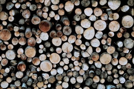 Bark Texture Pile Free Photo