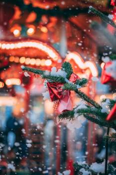 Decoration Holiday Winter Free Photo
