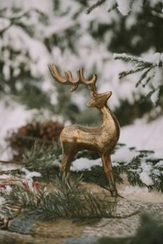 Buck Deer Mammal Free Photo