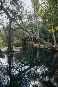 Swamp Tree Wetland Free Photo