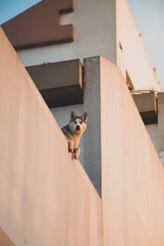 Dog Canine Toy dog #303435