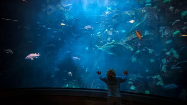 Underwater Fish Aquarium Free Photo