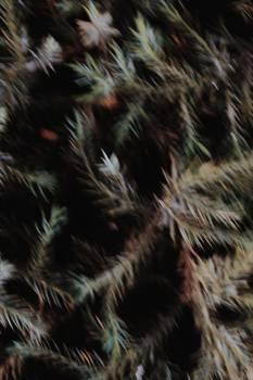 Tarantula Spider Arachnid #304285