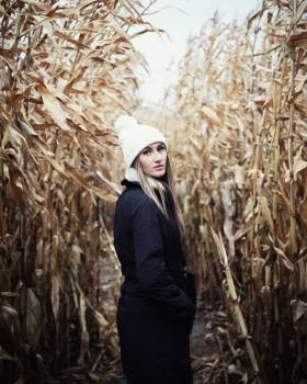 Wheat Field Rural Free Photo