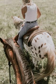 Horse Livestock Farm Free Photo