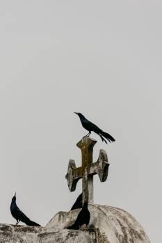 Bird Flying Fin Free Photo