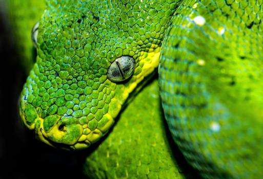 Green snake Snake Reptile Free Photo