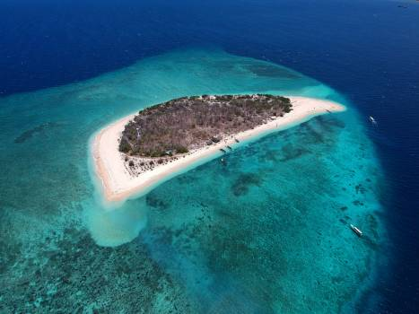 Ray Stingray Sea Free Photo