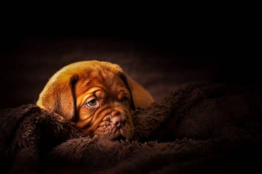 Dog Canine Pet #308094