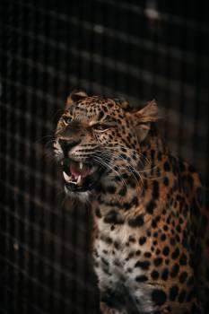 Leopard Fur Feline #308117