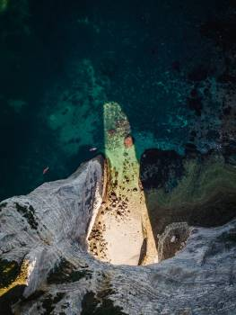 Eel Water Sea Free Photo
