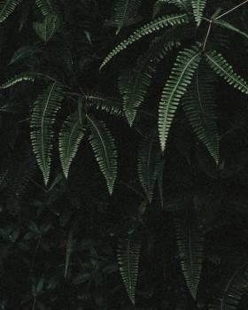 Fern Plant Pattern #308545