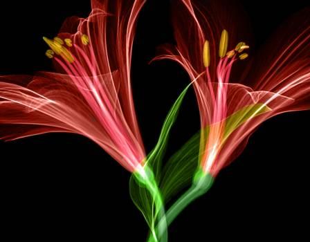 Plasma Design Art Free Photo