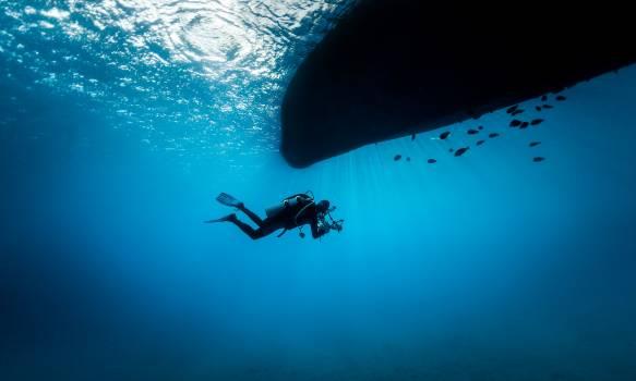 Sea Underwater Ocean Free Photo