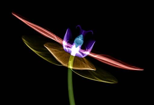 Lilac Design Petal Free Photo