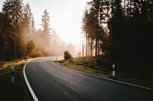 Bend Road Landscape Free Photo