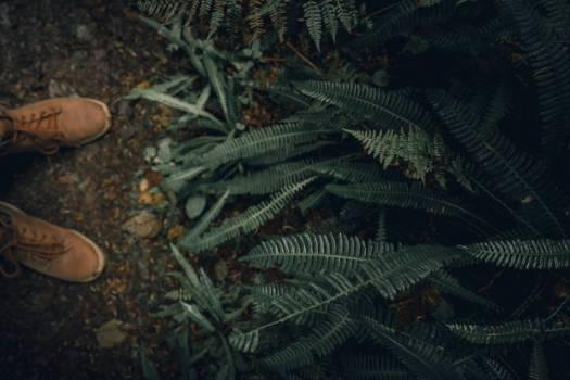 Feather star Echinoderm Fern Free Photo