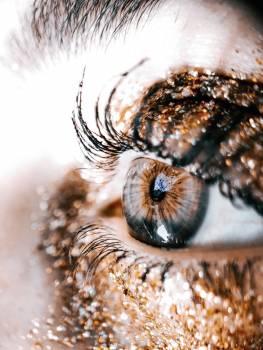 Invertebrate Arthropod Eye Free Photo