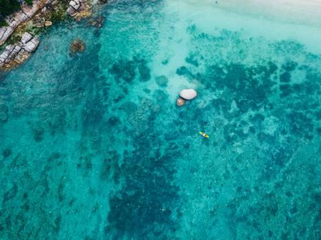 Fish Reef Sea Free Photo