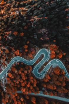 Snake Reptile Night snake #309986