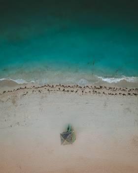 Sand Beach Soil #310216