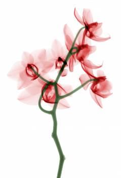 Pink Ground Leaf #310224