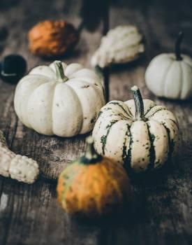 Pumpkin Squash Vegetable #310619