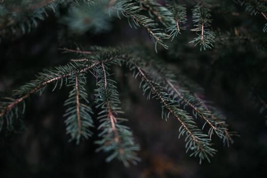 Feather star Echinoderm Invertebrate Free Photo