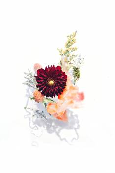 Watercolor Flower Floral Free Photo
