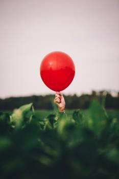 Balloon Hip Fruit Free Photo