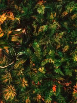 Vascular plant Pine Design #312328