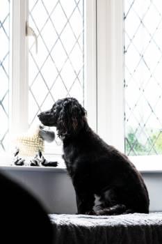 Dog Schnauzer Terrier #312594