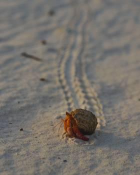 Hermit crab Crustacean Arthropod Free Photo
