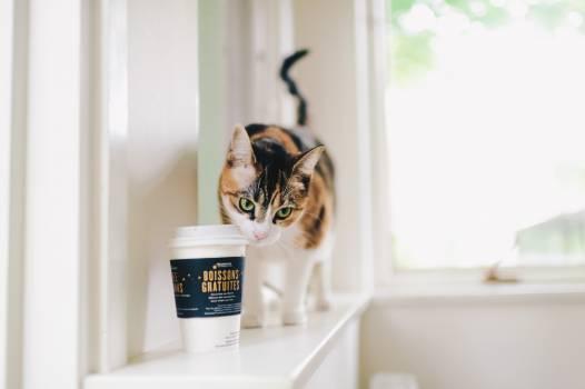 Cat Domestic Kitty Free Photo