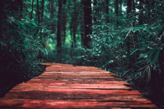 Tree Forest Landscape #313477