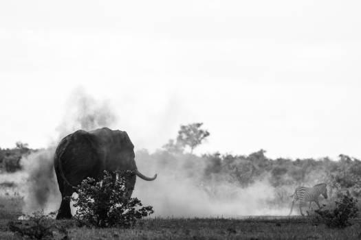 Tusker Mammal Landscape Free Photo