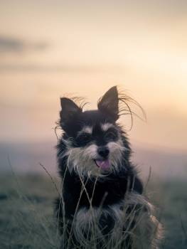 Pet Domestic Ear Free Photo