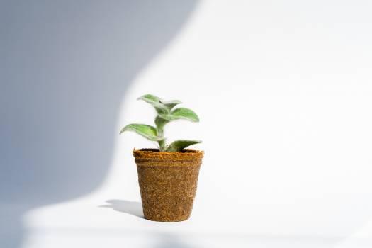 Seedling Pot Plant Free Photo