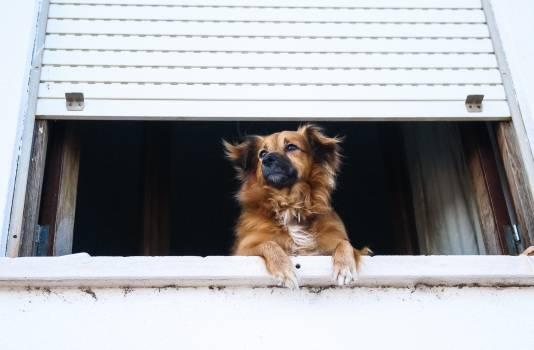 Dog Canine Pet #315060