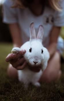 Bunny Rabbit Fur Free Photo