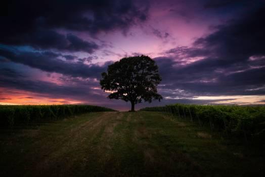 Sky Tree Lighting #315518